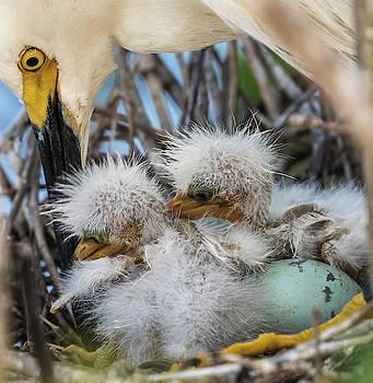 Feeding the Young by Jeffrey Klug