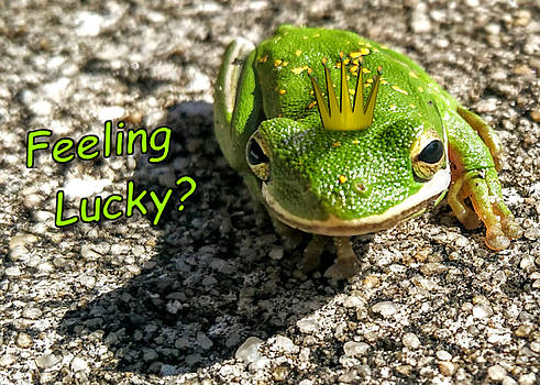 Feeling Lucky by Vincent Autenrieb