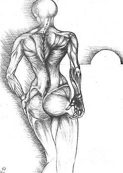 Female Back Study by Drew