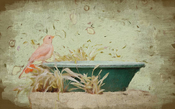 Female Cardinal by Diane Lindon Coy