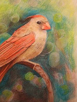 Female cardinal by Joan Mansson