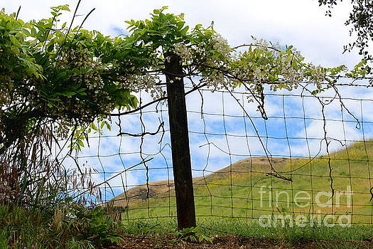Fence and Vines by Katherine Erickson