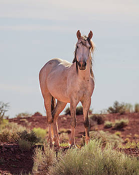 Feral Stallion by Fred Hood
