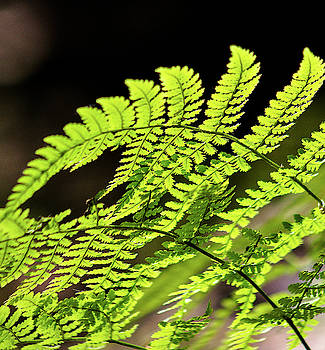 Fern by Adam Kilbourne