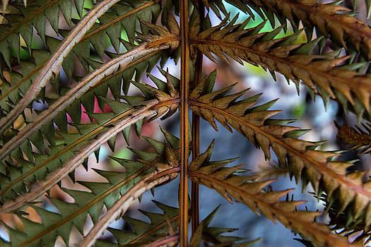 Fern Detail by Tim Beebe