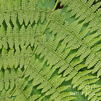 Fern Fronds over Green Leaf by Carol Groenen