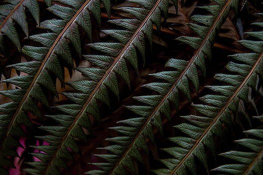 Fern in Focus by Tim Beebe
