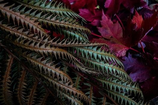 Fern Swirl by Tim Beebe
