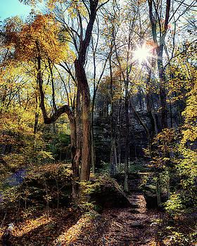 Susan Rissi Tregoning - Ferne Clyffe Trails