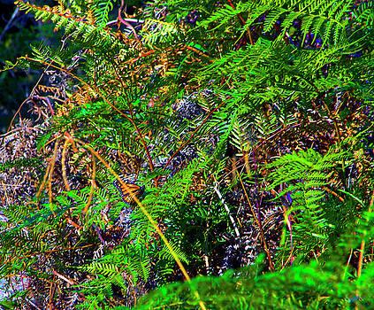 Ferns And Butterfly by Miroslava Jurcik