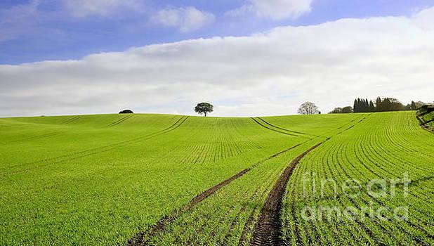 Field in Autumn 2 by John Chatterley