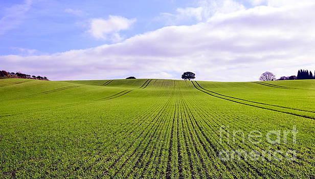 Field in Autumn by John Chatterley