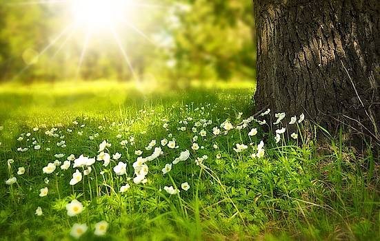 Field of daisies by Top Wallpapers