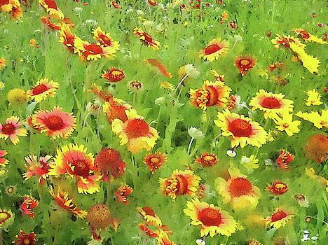 Fields of Gold - Wildflowers by Andrea Kollo
