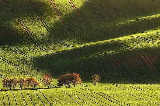 Fields of waves by Marek Ondracek