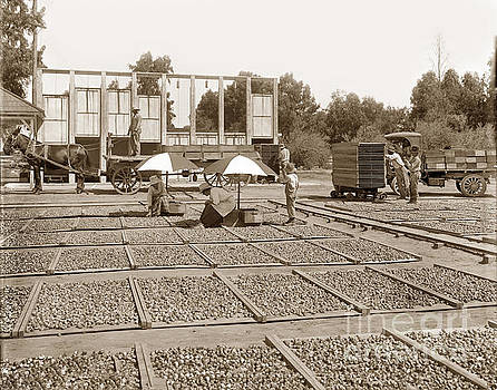 California Views Archives Mr Pat Hathaway Archives - Fig Drying Showing drying kilns, Fresno