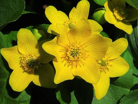 Fill Me Up Buttercup  by Lori Frisch