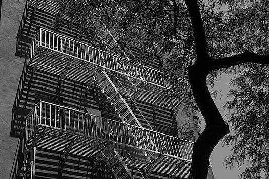 Fire escape and tree #2 by Alan Goldberg