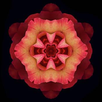 Fire Rose 2 by Marsha Tudor