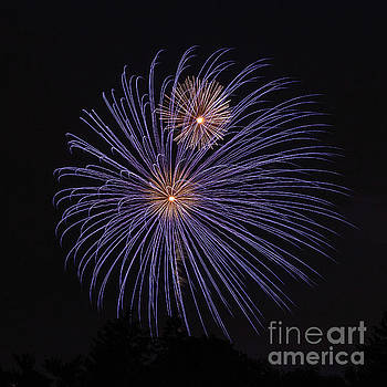 Fireworks by Nicki Hoffman