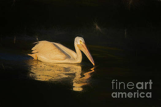 First Light on White Pelican by Nikki Vig