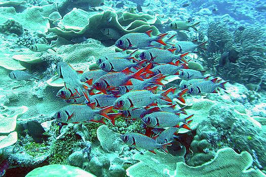 Susan Burger - Fish and Reef