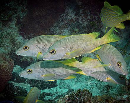 Jean Noren - Fish Chaos