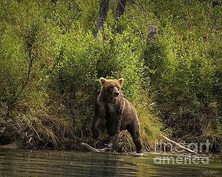 Fishing 2 - Bears by Jan Mulherin