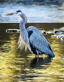 Fishing The Golden Hour by Steve Marler
