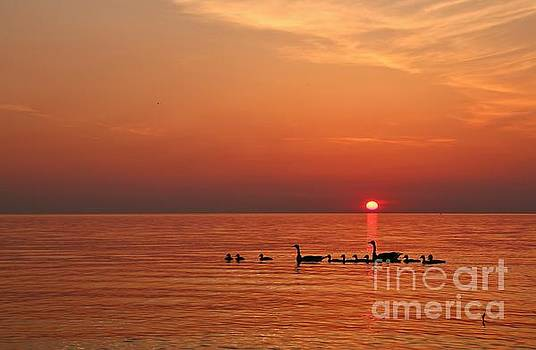 Fishy Geese Sunset by Tony Lee