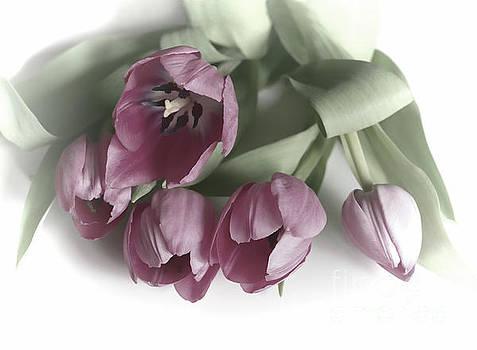 Five Pink Tulips by Lynn Bolt