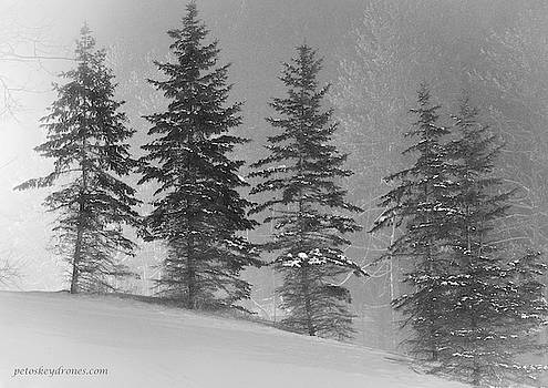 Five Trees by Laurent Fady