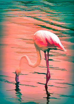 Flamingo Art by Rosalie Scanlon