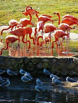 Flamingos by Vijay Sharon Govender