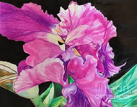 Fleur de Lis en Noire  by Laurel Adams