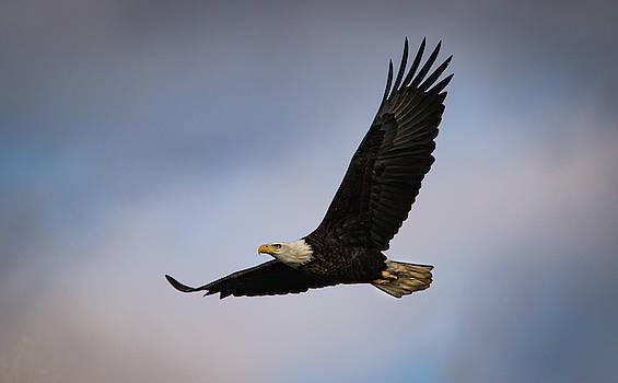 Flight by Ray Congrove