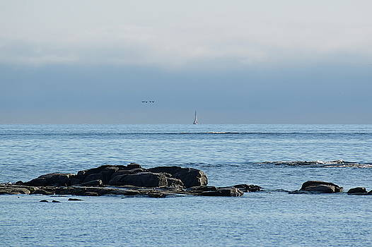 Flock of birds flying over the blue ocean with a boat sailing at the horizon by Ulrich Kunst And Bettina Scheidulin
