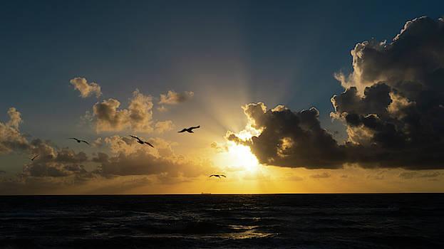 Flock of Seagulls Sunrise Delray Beach Florida by Lawrence S Richardson Jr