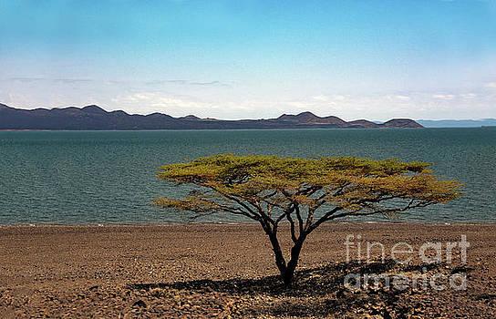 Flora of lake Turkana by Morris Keyonzo