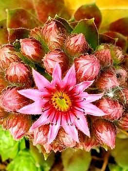 Floral Beauty by Vijay Sharon Govender