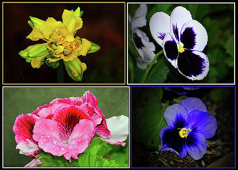 Floral Collage Of Garden Flowers by Constance Lowery