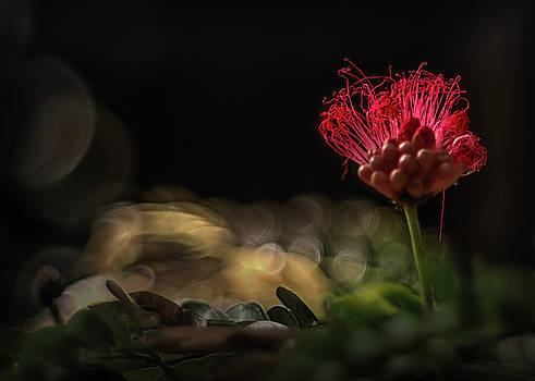 Floral Fire by Scott Wyatt