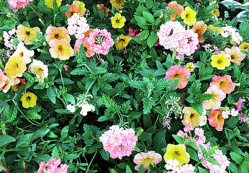 Aimee L Maher ALM GALLERY - Floral Mix
