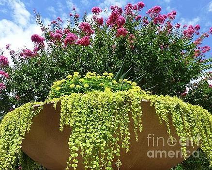 Floral Urn in Washington DC by Barbie Corbett-Newmin