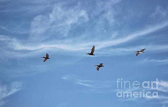 Florida Flight Formation - Pelicans by Karen Adams