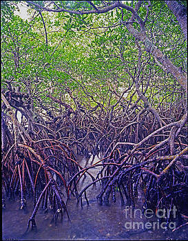 Florida Mangrove Forest by Larry Nieland