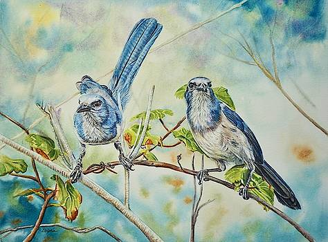 Florida Scrub Jays by Gail Dolphin