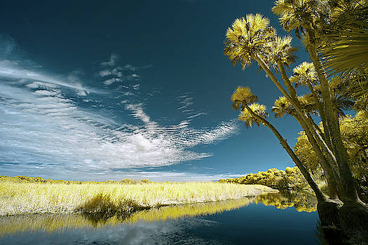 Florida State Park by Jon Glaser