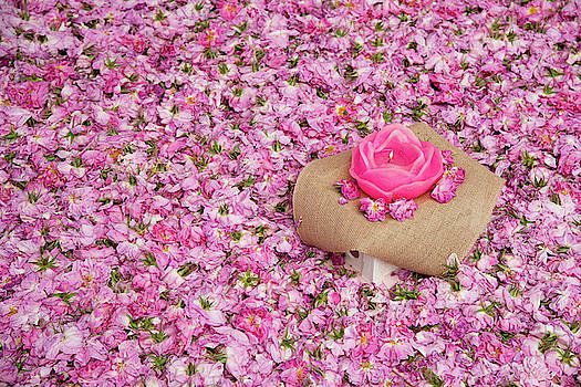 Flower bed of pink rose flowers by Michalakis Ppalis