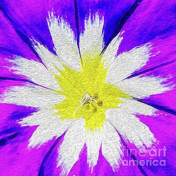 Flower Burst by Kenneth Montgomery